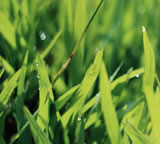 Lawn and grass care in London Ontario